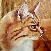 Farm Cat On Rustic Wood Poster