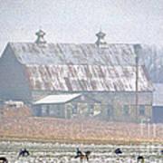 Farm Fed Poster
