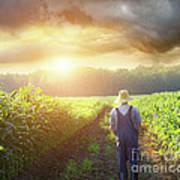 Farmer Walking In Corn Fields At Sunset Poster by Sandra Cunningham