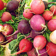 Farmers' Market Radishes Poster