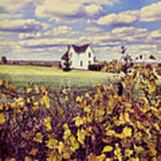 Farmhouse And Grapevines Poster