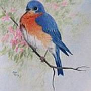 Fat And Fluffy Bluebird Poster