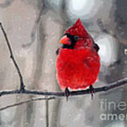 Fat Cardinal In The Snow Poster