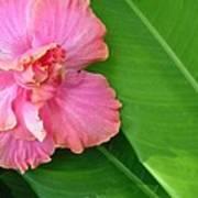 Favorite Flower 2 Poster