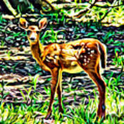 Fawn In The Woods Poster