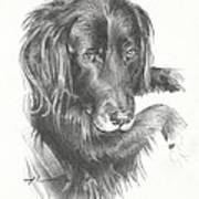 Black Dog Laying Pencil Portrait Poster
