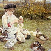 Feeding Ducks Poster