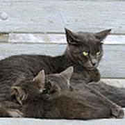 Feeding The Kittens Poster