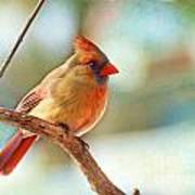 Female Cardinal - Digital Paint IIi Poster