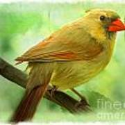 Female Cardinal In Elm Tree - Digital Paint Poster
