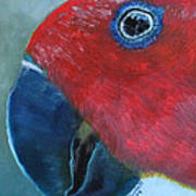 Female Eclectus Poster
