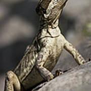 Female Jesus Lizard Poster