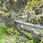 Fence And Beach Shrub Poster