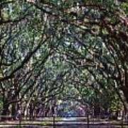 Fence And Wormsloe In Savannah  Poster