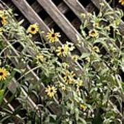 Fence Lined Wildflowers Poster