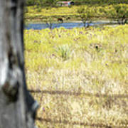 Fence Pasture Horse 14419 Poster