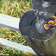 Fence Post Fungi Poster