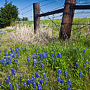 Fence Posts Poster