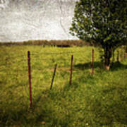 Fence With Tree Poster