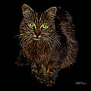 Feral Cat - 9905 F Poster