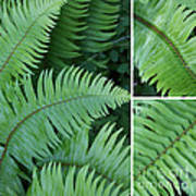 Fern Collage Poster