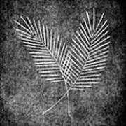 Fern Simple Poster by Brenda Bryant