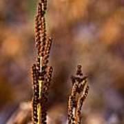 Fern Spore Stalk In Morning 2 Poster