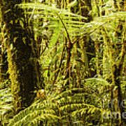 Ferns And Moss Poster