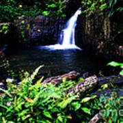 Ferns Flowers And Waterfall Poster
