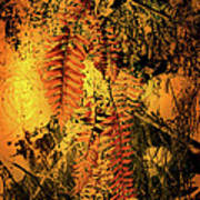 Ferns In Fall Poster