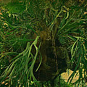 Ferns In The Jungle Room Poster