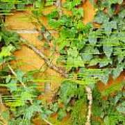 Ferns Vines And Lines 2am-112099 Poster