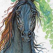 Ferryt Polish Black Arabian Horse Poster