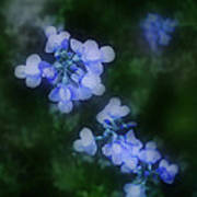 Field In Blue Poster