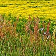 Field In Spring Poster by Beverly Hammond