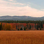 Field In Yellowstone Poster