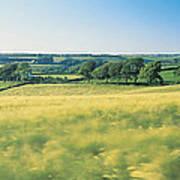 Field Near Barnstaple, North Devon Poster