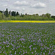 Field Of Camas And Western Buttercup Poster