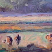 Field Of Crane Poster