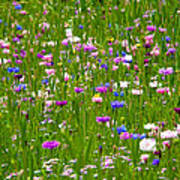 Field Of Flowers Poster by Leyla Ismet
