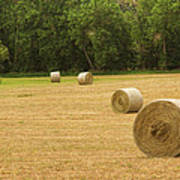 Field Of Freshly Baled Round Hay Bales Poster