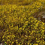 Field Of Goldfields In Park Sierra-ca Poster