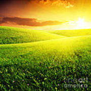 Field Of Grass And Sunset Poster