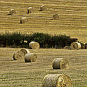 Field Of Hay Bales Poster