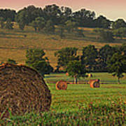 Field Of Hay Poster