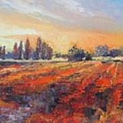 Field Of Light Oil Painting Poster