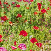 Field Of Poppies Digital Art Prints Poster