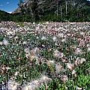 Field Of Seeding Flowers Poster