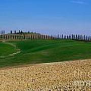 Field With Cypress Trees Poster