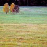 Field With Four Trees Poster